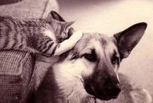 unlikely friendships  / by freekibble