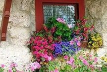 diy - windowboxes / by Marcia Myers-Knoles