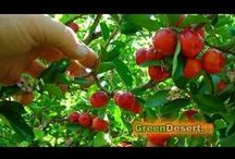 GreenDesert garden videos / by Green Desert