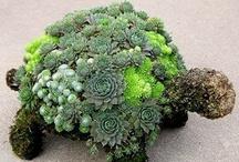 plants / by Linda Carl