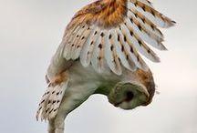 owls an birds / by Linda Carl