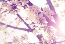 | Spring | / by Anna St.