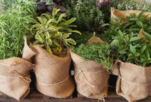 ~ Herb garden ~ / Inspirations and uses for my herb garden { #herbs #herbgarden #herbal #gardening }