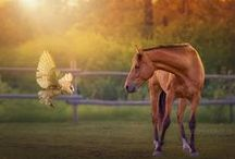My Photography / Photos and painted photography by me — Debby Herold Photography. I'm a lifestyle photographer in Calgary, AB specializing in portraits of people and horses.   Prints can be ordered through http://fineartamerica.com/profiles/debby-armstrong-herold.html