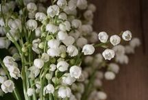 The elegant flowers / Fragrances which have recognizable floral scents, noble as an orchid, innocent as lavender, nostalgic as lily of the valley.