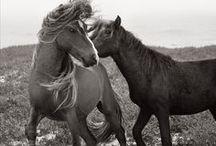 Love Horses  / by Ebby Guerrero