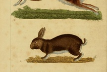 French Hares