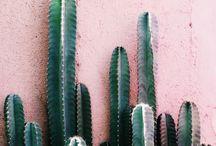 · Palm + Cactus ·