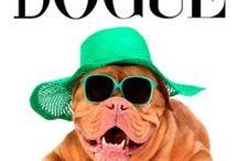 Pets + Sunglasses