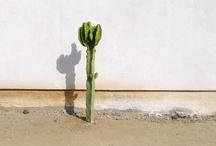 Cactus & Crasas