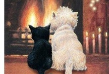 Just like Stevie - Black Cat / All things that remind me of my cat Steve...he is so wonderful! / by Jackie Hawkins