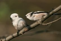 Birds of a Feather / by Katie Hamil