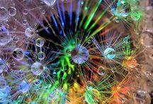 Dandelions & Pinwheels / Dandelions, a true beauty of nature