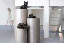 Interior: cats
