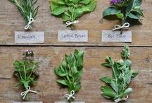 Herbal Remedies, Oils, Tinctures, ETC / Oils, Tinctures, and other healthy items made from herbs