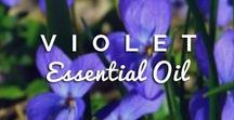 Web Essential Oils - Reviews / Your favorite Essential Oils reviewed from webessentialoils.com History, Facts, Properties, Uses, Benefits, Precautions and Blend Compatibility with other oils...