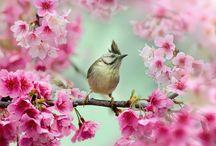 Birds / by Elena Pettigrew