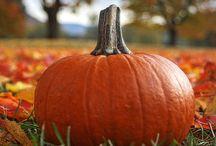 Ƭhe Ƥumpkin Ƥatch ღ / Pumpkin, sweet potato, squash, carrot & other fall recipes. / by ∙✿⊱৲ ℋoℓℓy Ꭿnn