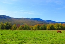 Vermont Fall Foliage / by Country Walkers