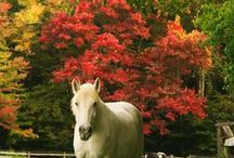 Northeast Ohio fall foliage / by The News-Herald