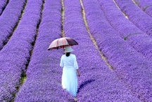 Provence, France / Here's just a taste of CW's NEW Provence tours. 