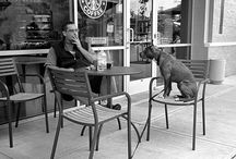 """ELLIOTT ERWITT / He's was a french photographer . """"it's about reacting to what you see, hopefully without preconception. you can find pictures anywere. it's simply a matter of noticing things and organizing them. you just have to care about what's around you and have a concern with humanity and the human comedy."""" E.E"""