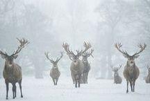seasons | winter mood / by Kaity Brown