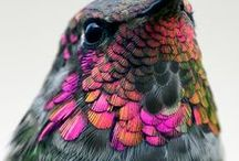 Birdies / So many beautiful wild birds with amazing patterns and colors!