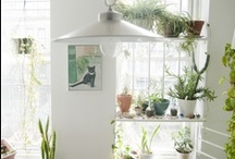 Dream Home / Ideas for my dream home and the beautiful things I wish to fill it with. / by Amanda Adams