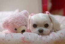 cute / by Penny Worden