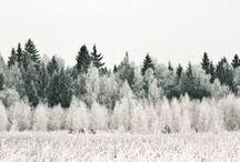 trees / by Tahnee Appel