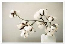 blooms / by Tahnee Appel