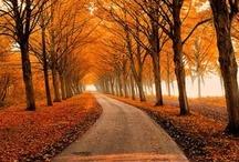 Autumn Only