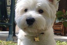 Sweet Dogs / I have a weakness for Westies.
