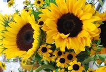 Garden: Fresh Flowers / ...flowers soothes the soul.