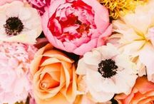 In Bloom / by Maggy London
