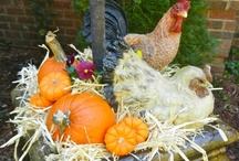 Seasons: Fall Decor / From pumpkins to acorns to orange-colored squash - these ideas will help you celebrate the season of Fall.