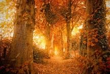 Autumn - my favorite season