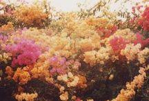 dream garden / by Haley
