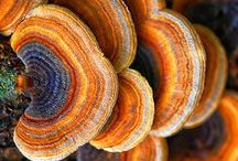 Nature's Canvas / Vibrant, rich colors in nature