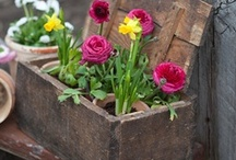 Garden: Containers / I love gardens, and I love mini gardens in pretty containers.