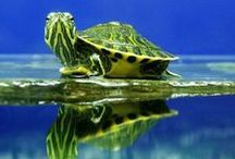 Turtles ♥