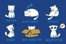 cat vs. human