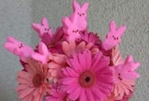 easter spring time / by ❤️Mandy Evert❤️