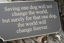 Animal rescue / Plans and ideas for our future animal rescue :)  / by Chelsea- HorseFeathers Gifts