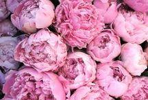 Floresça / Minha amada mãe, que é uma linda flor, queria rosas quando me esperava.Sou apaixonada por flores.As vezes tenho vontade de comer rosas, rosas vermelhas.Queria estar num campo inteiro delas.