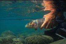Environmental & Political News  / by Rit Sheridan