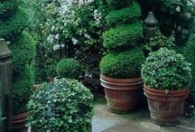 Not my garden / by Ewa Bogdanowicz