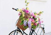 Blossom / Fleurs / #blossom #flowers #fleurs