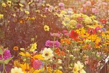 Gardening: Flowers & Ornamentals / by Falon Bochniak